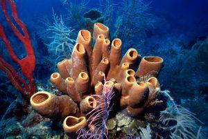 Esponja do mar