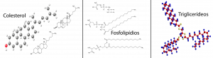 Triglicerídeos, fosfolipídios e colesterol