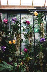 Raízes velame - orquídeas