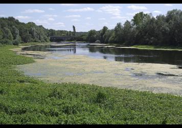 Rio em processo de eutrofização