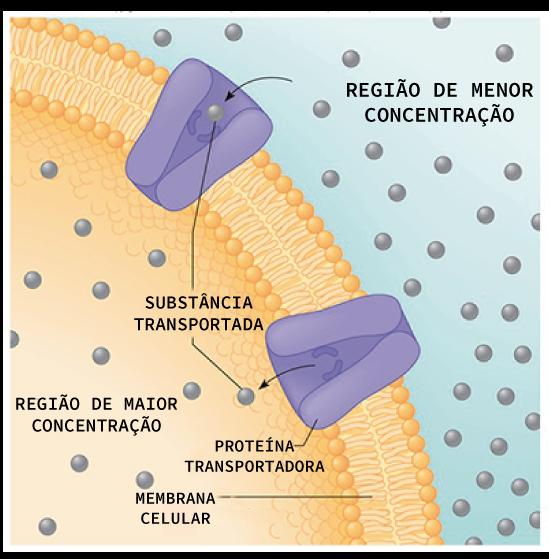 Esquema de funcionamento da difusão facilitada