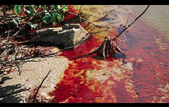 Fenômeno da maré vermelha