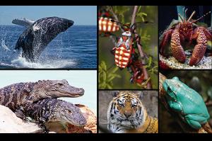 Exemplos de espécies que constituem o Reino Metazoa