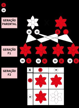 Figura representativa da segregação independente