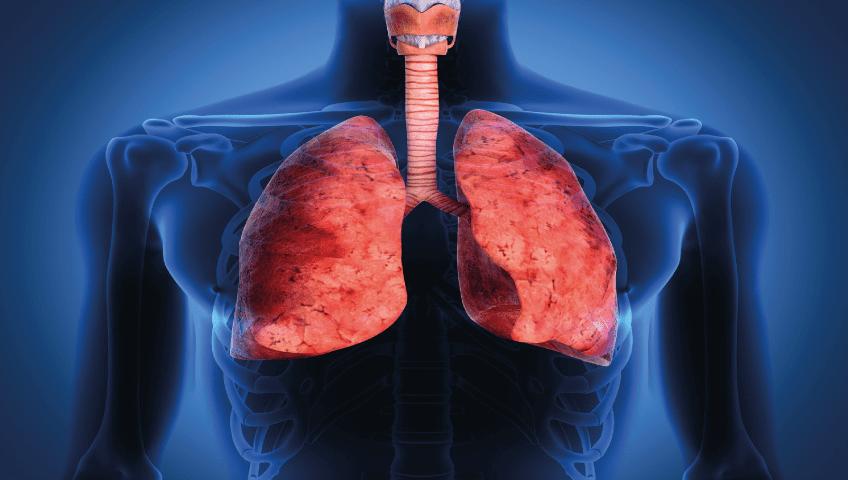 sistema-respiratorio-pulmonar