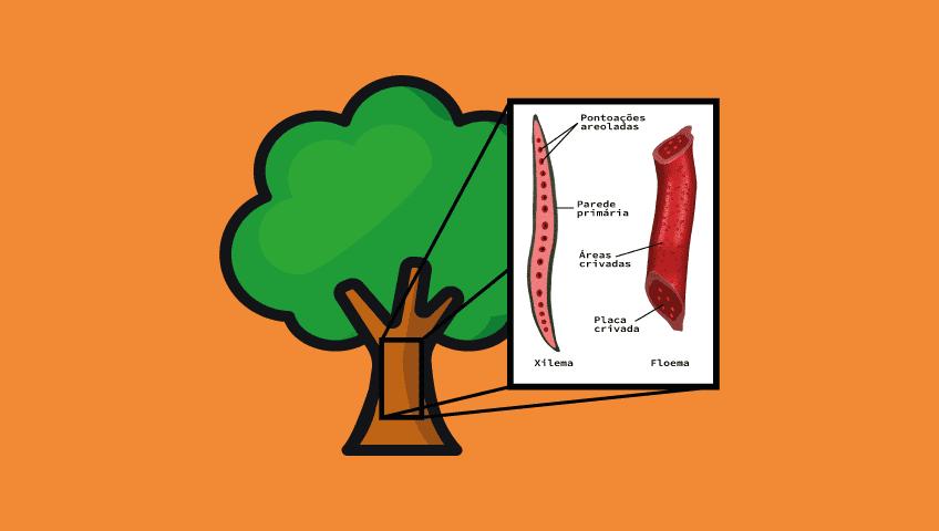 tecido-vegetal