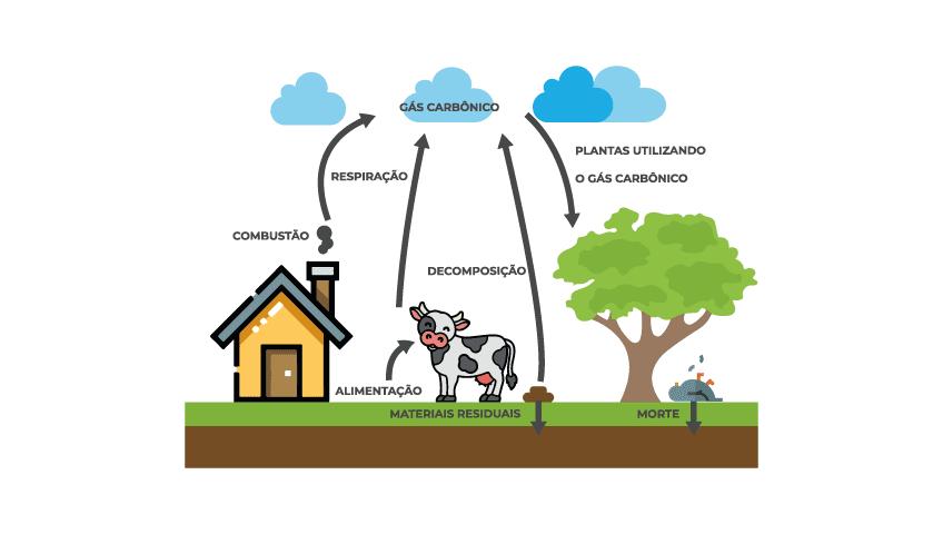 ciclo-do-carbono
