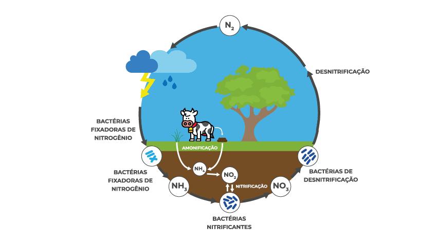 ciclo-do-nitrogenio