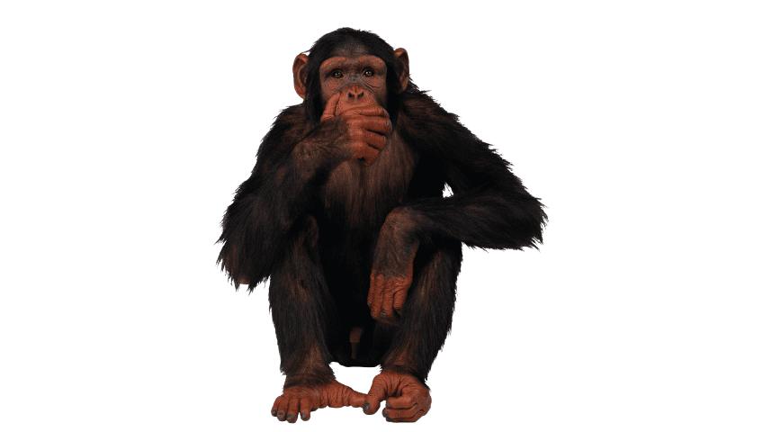 Curiosidades sobre os macacos